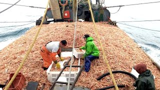 Everyone should watch this Fishermen's video - Catch Hundreds Tons Shrimp With Modern Big Boat
