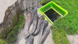 Catch a Lot of Fish From Hole Fish Trap- Smart Boy Build Fish Trap By Muddy soil