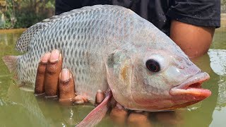 Amazing Underwater Fishing | Best Fishing Video
