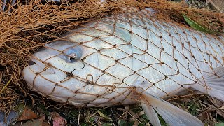 Best Cast Net Fishing | Fishing Video | Best Fishing Video