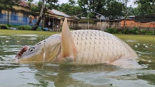 Underwater Fishing | Underwater Carp Fishing