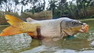 Best Underwater Fishing | Underwater Carp Fishing