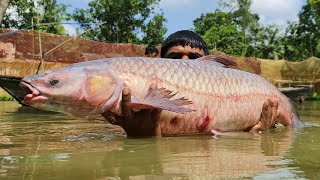 Catch a Lot of Fish With Net Fishing | Net Fishing in Pond