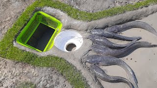 Amazing Hole Fish Trap- Smart Boy Build Fish Trap By Muddy soil with Plastic Box