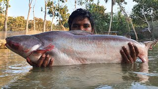 Cast Net Fishing | Net Fishing in Pond | Best Net Fishing Video