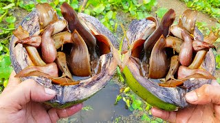 Amazing Fishing Catch Catfish by Coconut Fish Trap DIY | Boy Catching Catfish Using Green Coconut