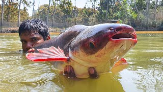 Catch Big Fish | Easy Net Fishing | Traditional Cast Net Fishing in Village Pond