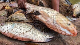 Big Fish | Easy Cast Net Fishing | Fishing Video | Fish Catching
