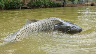 Amazing Underwater Fishing | Underwater Carp Fish Fishing Techniques (Part-7)