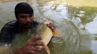 Amazing  Fishing | Underwater Carp Fishing (Part-1)