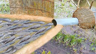 Amazing  Fish Trap- Smart Boy Build Fish Trap By PVC Pipe ..