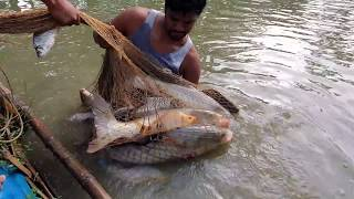 Cast Net Fishing For 100 lbs Big Fish | Cast Net | Net Fishing in the Village Pond
