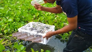 Amazing Trap Fishing-can Use Apple Basket with Plastic Bottle ..