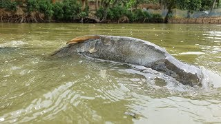 Amazing Underwater Fishing | Underwater Carp Fish Fishing Techniques (Part-1)