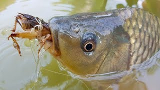Fish Hunting by Insects Bait | Amazing Fishing Bait...