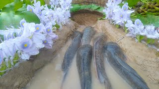 Trap Fishing | CatFish Trap- Amazing Boy Build Fish Trap By Muddy soil Useing Natural Flower