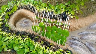 Hole Fish Trap- Smart Boy Build Fish Trap By Muddy Soil Useing Netural  Material that's Work100%