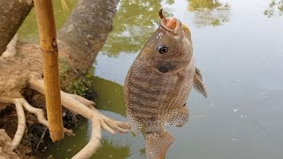 Hook Fish Hunting | Primitive Fish Catching by Hook