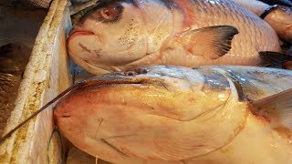 Fish Market | Fresh Fish Market Asia | Biggest Fish Market (Part- 1)