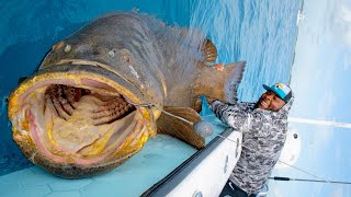 320lb NFL Player vs 400lb Grouper