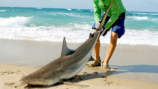Catching Sharks from the Beach & How it Started