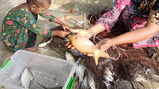 Amazing net fishing in village / Cast net fishing in village (Part-473)