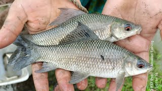 Best Fishing Video / Net Fishing in Village / Village Fishing (Part-471)