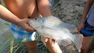 Cast Net Fishing - Traditional Catching Fish With A Cast Net - Fishing By Cast Net