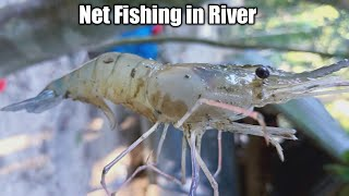 Net Fishing in River - Net Fishing in The Sea - Fishing With Beautiful Nature (Part-455)