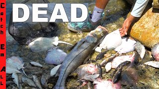 1,000s of FISH DEAD! **Miami FL Biscayne Bay**