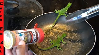 BABY IGUANA Catch and COOK! **How to BLOW DART**