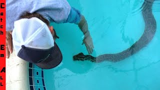 **PART 2** 15 FOOT PYTHON in FLORIDA POOL Meets PYTHON COWBOY!