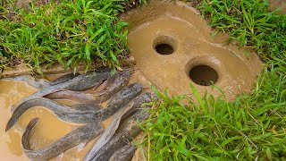 Amazing Easy Fish Trap | Make A Simple Fish Trap To Catch Big Fish
