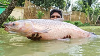 MONSTER Big Cast Net Fishing | Best Cast Net Fishing