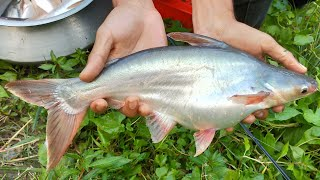 Best Net Fishing - Traditional Cast Net Fishing in Village Pond - Fish Video Part (504)