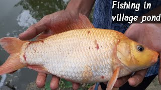 Traditional Cast Net Fishing in Village Pond - Fishing With A Cast Net (Part-525)