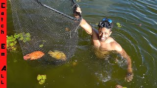 SWIMMING to CATCH AQUARIUM FISH! **Exotic Fish in South Florida**