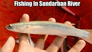 Net Fishing in Sundarban River - Catching Fish By Net in River