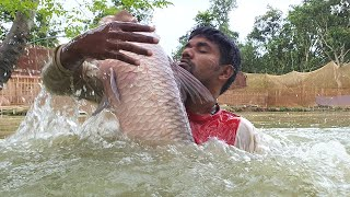 Amazing Net Fishing | Most Satisfying Cast Net Fishing | Unbelievable Fishing Video