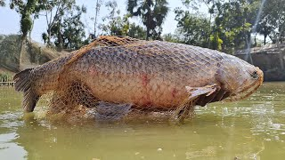 Big Catch Fishing | Cast a Lot of Fish With Cast Net Fishing | Fishing 2021
