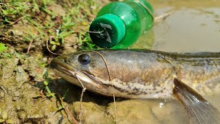 Bottle Fish Trap | How to Catch Fish With Plastic Bottle