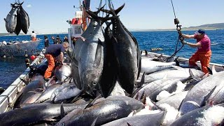 Amazing Fastest Giant Bluefin Tuna Catching Net - Fastest Fishing & Processing Hundreds Tons of Tuna